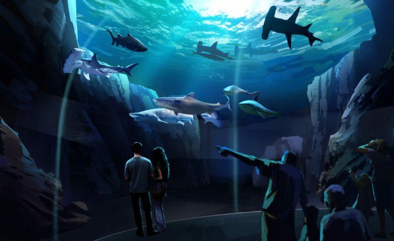 georgia aquarium shark exhibit