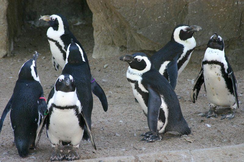 denver's new zoo expansion for penguins
