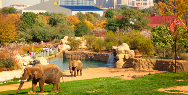 indianapolis zoo tembo camp