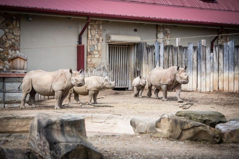 cleveland Metropark's new zoo project black rhino reserve