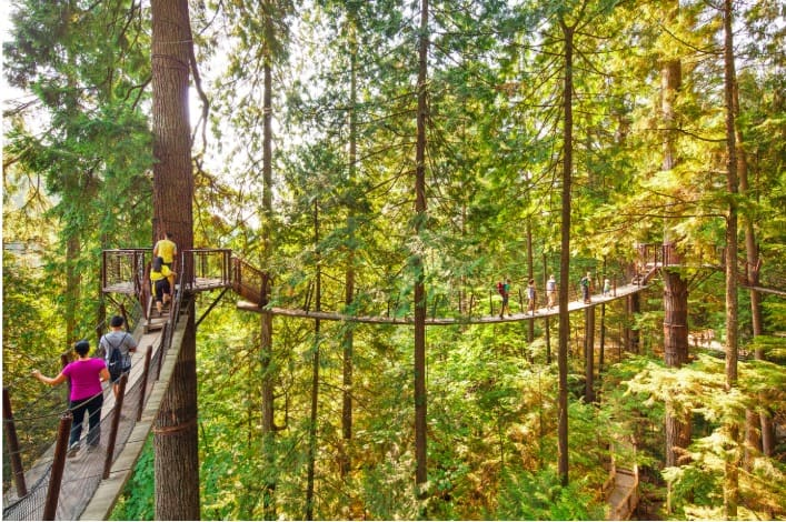 tree top walk at Capilano Suspension Bridge Park, Canada