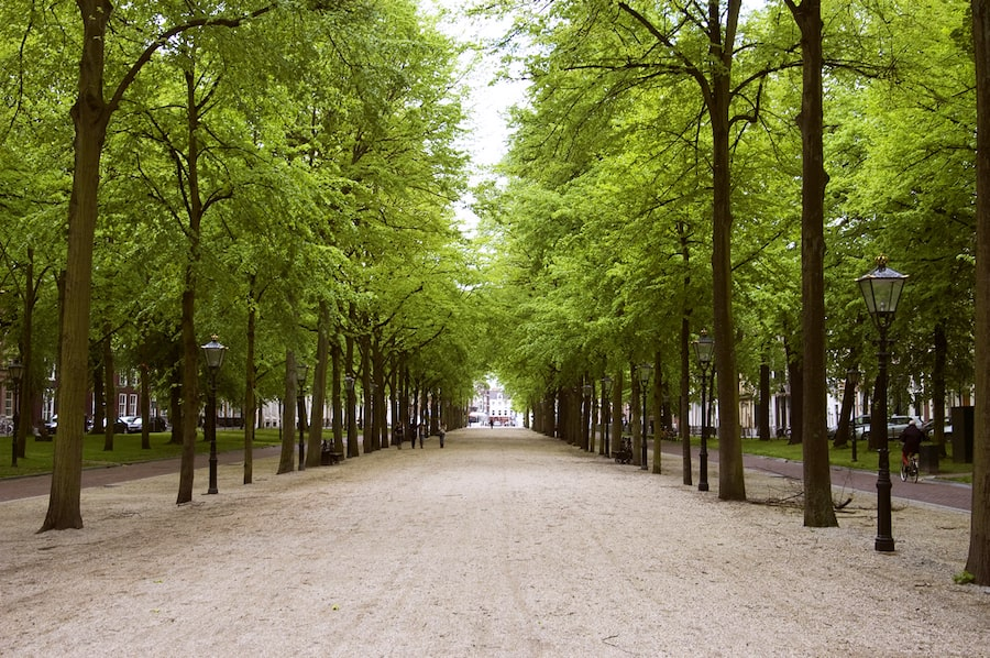 Lange Voorhout in The Hague, where Imagine Leisure conducted a study into future sculpture exhibitions
