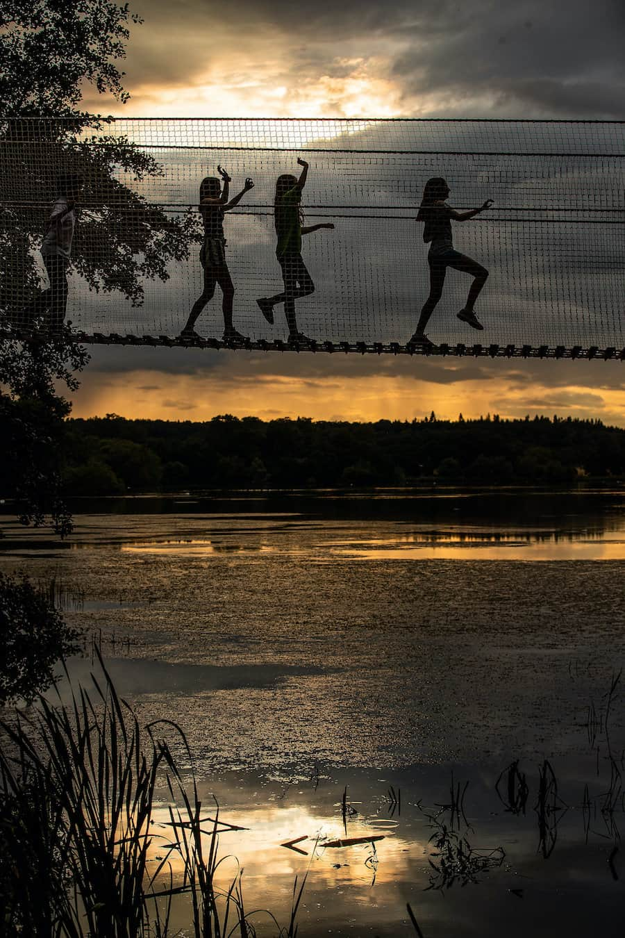 children on a rope bridge at sunset, at Skelf Island, Castle Howard