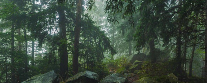 Valo Motion donates to save ancient Finnish forests