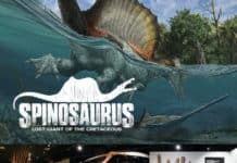 Spinosaurus touring exhibit by exhibits development group