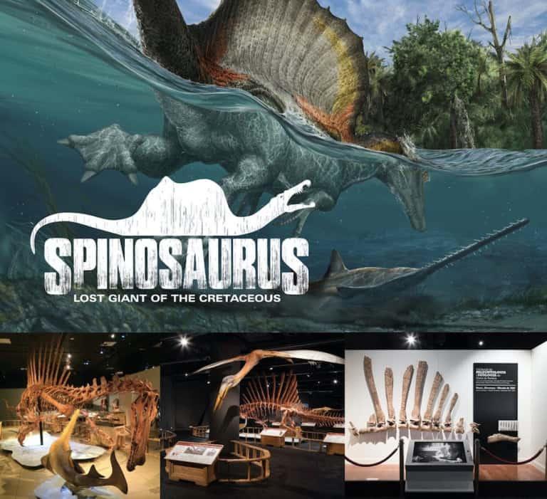 Spinosaurus touring exhibit by exhibits development group