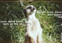 meerkat on poster for the aratag app
