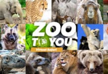 Denver Zoo launches Zoo to You: Virtual Safari in coronavirus closure