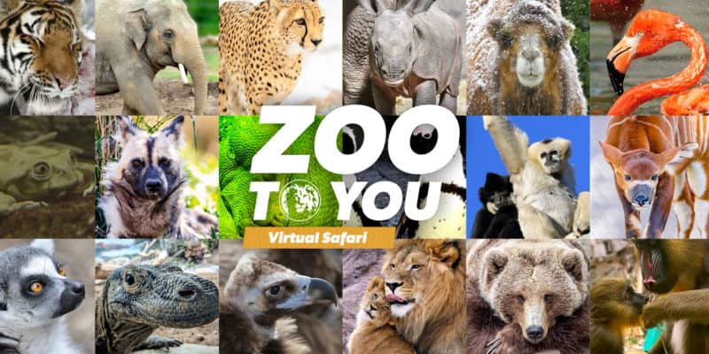 denver zoo virtual safari - attractions industry responds to coronavirus