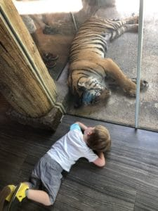 Child with Tiger at Nashville Zoo