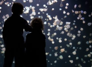 attractions industry coronavirus update - Vancouver Aquarium may be forced to close permanently