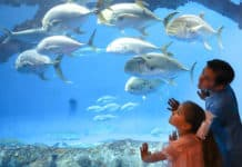 Children at Texas State Aquarium, one of the zoos and aquariums currently closed due to coronavirus