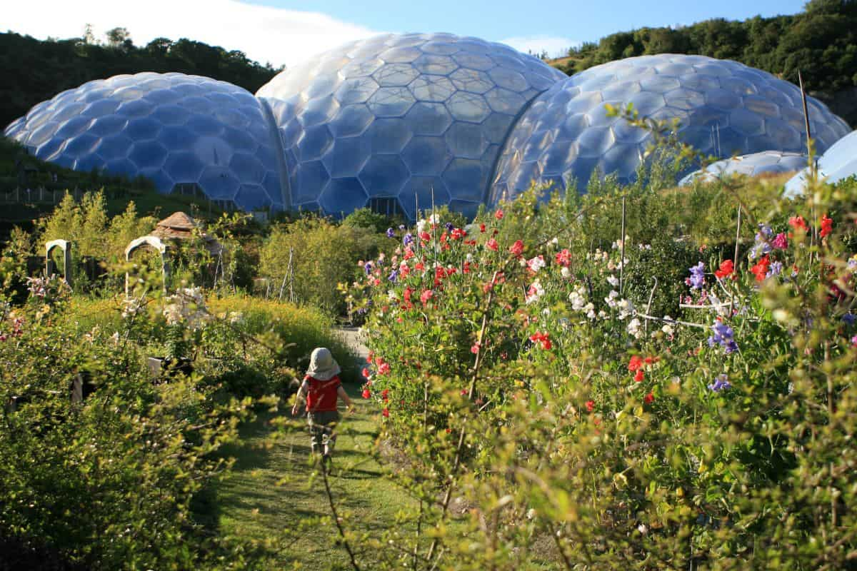 ALVA member The Eden project domes and gardens in the summer