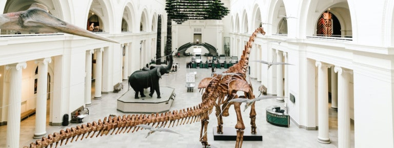 The Field Museum is providing online education during the coronavirus crisis