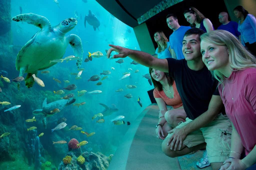 Turtle Habitat SeaWorld Orlando theme park financial impact COVID