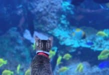 Kittens and puppies go on day trip to Georgia Aquarium