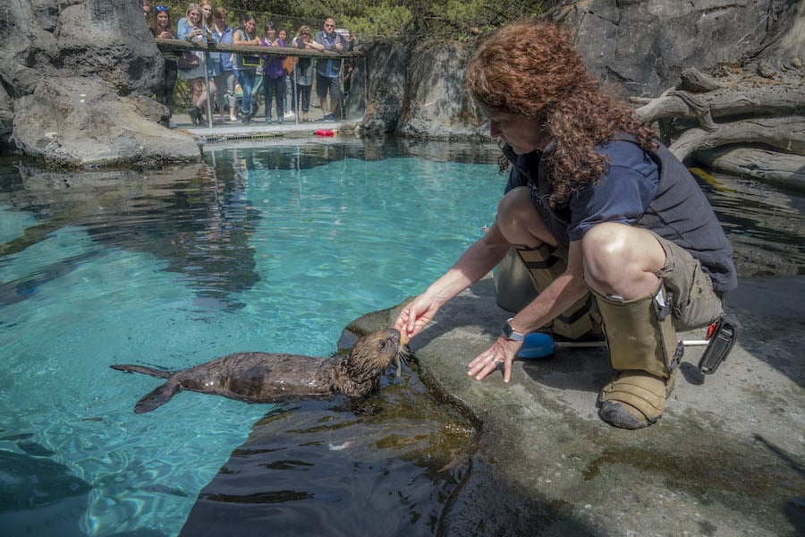 sea otter at Oregon Zoo, one of the zoos currently closed due to coronavirus