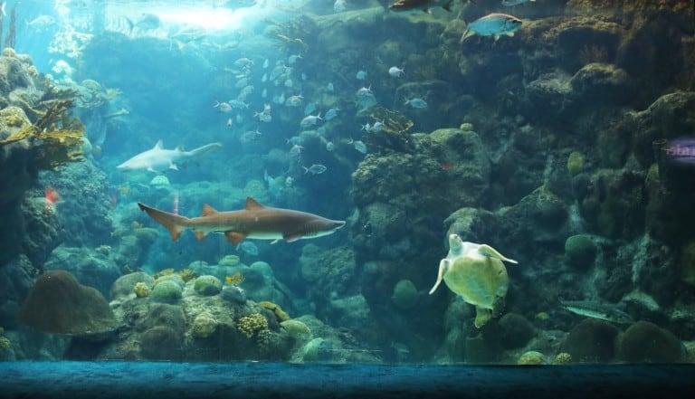 Coral Reef Florida Aquarium