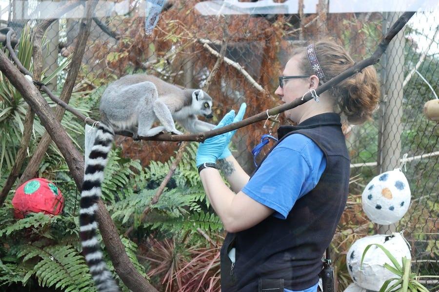 Lemur Florida Aquarium