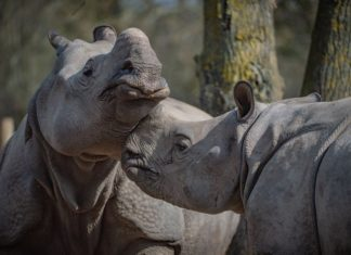 chester zoo reopening covid-19 outbreak