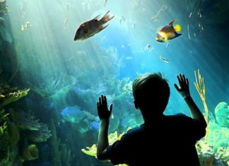 roto-aquarium child looking at fish