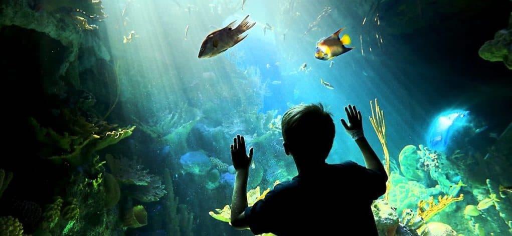 roto-aquarium child looking at fish