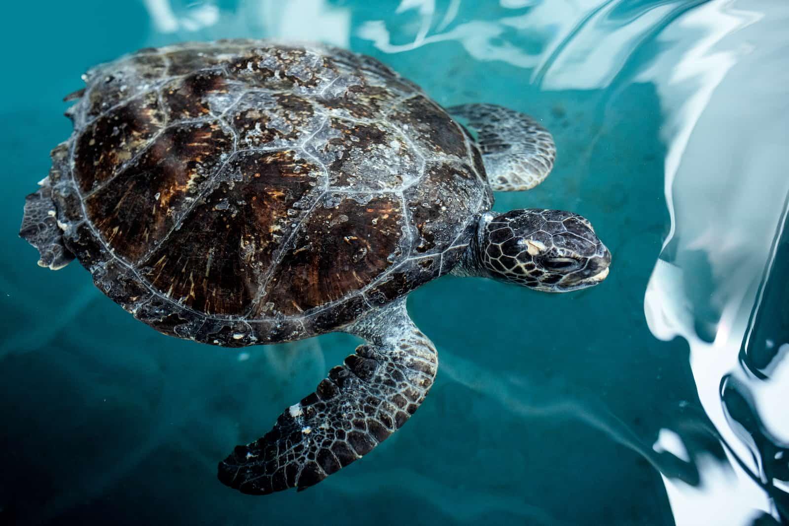 SEALIFE Sydney Animal Rescue