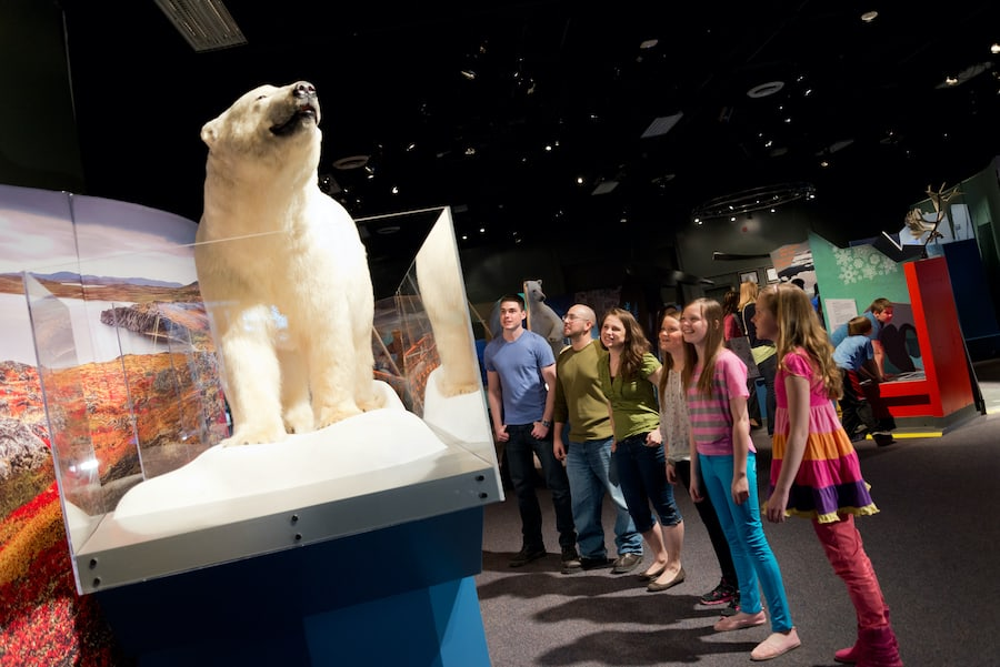 Science North polar bear travelling exhibitions covid 19