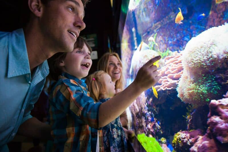 a family watches the fish in the coral exhibit