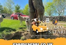 Farm Safari Thornton Hall Country Park Vennersys