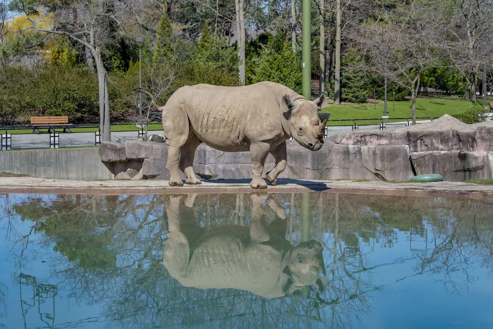 Rhino Jozie Milwaukee Zoo