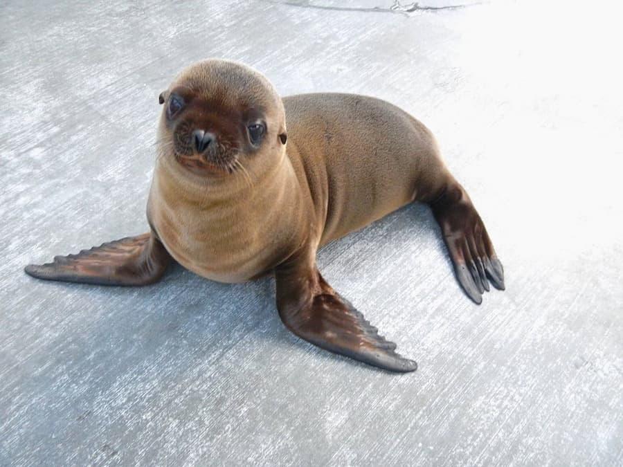Seal Niagara Aquarium