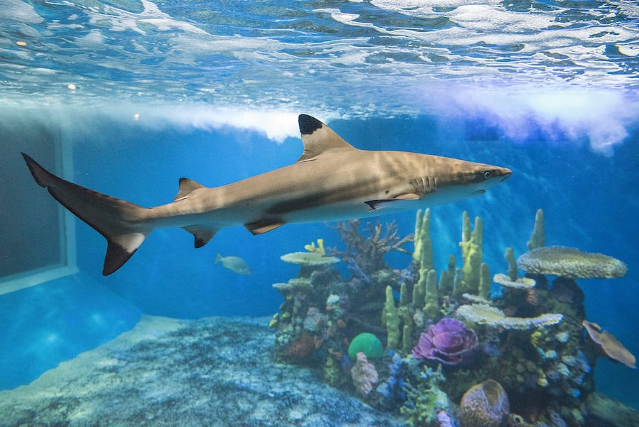 The shark reef will get an expansion as part of the masterplan