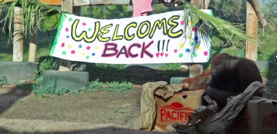 COVID-19 messaging Gateway webinar Welcome back zoo banner