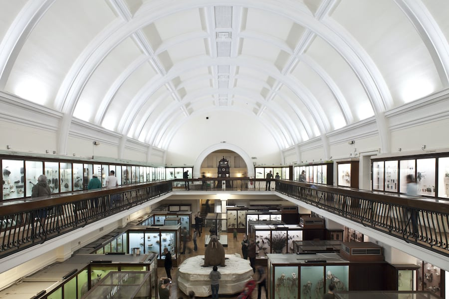 Horniman Natural History Gallery. Photo by Joel Knight