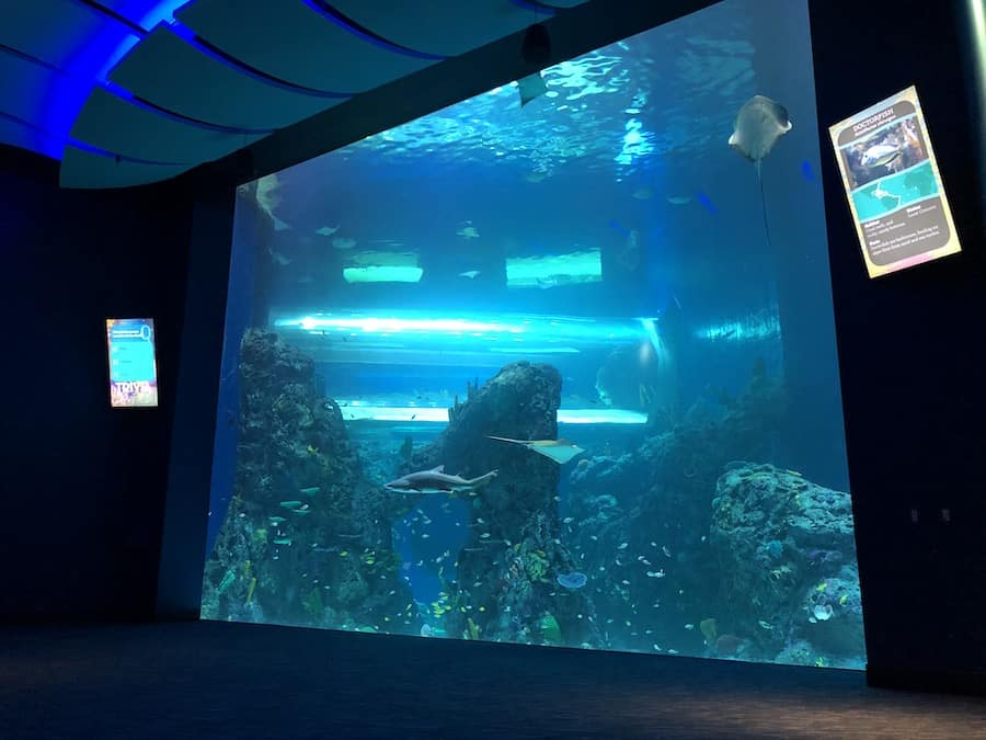 Mississippi Aquarium tank