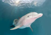 Winter the dolphin Clearwater Aquarium