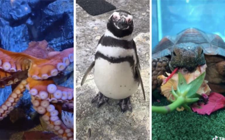 tiktok aquarium of pacific