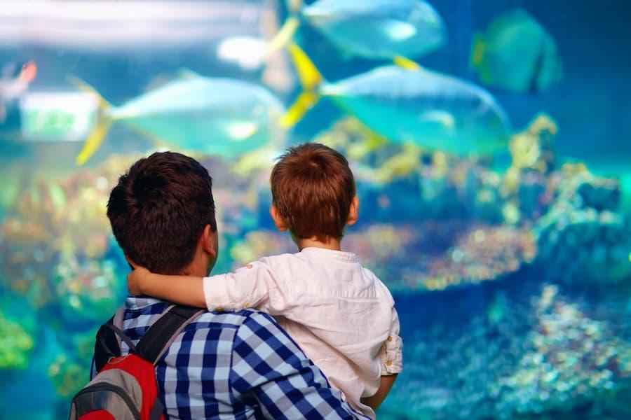 Aquarium Convious