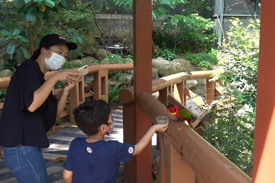 Jurong Bird Park_Lory feeding wildlife reserves singapore