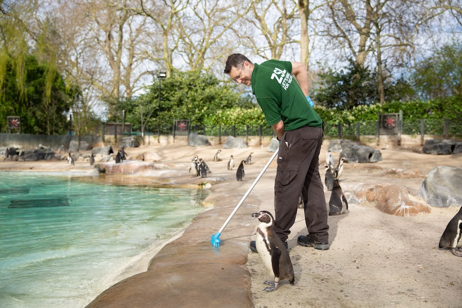 Keeper Martin Franklin cleans Penguin Beach Zoological Society London