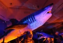 Megalodon World Touring Exhibitions