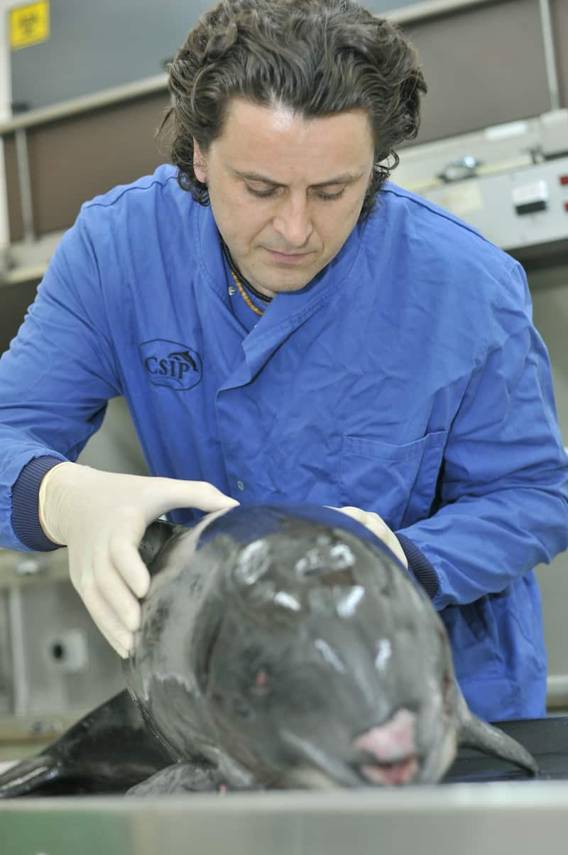 Rob Deaville carrying out a postmortem on a porpoise at Zoological Society London