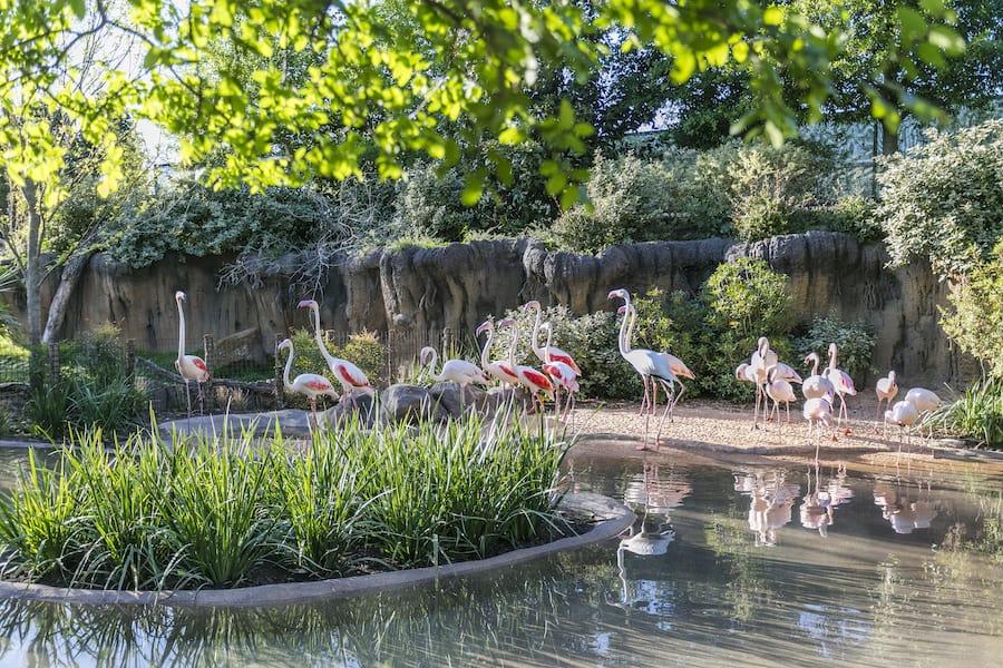 Flamingos Fort Worth Zoo