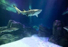 Georgia Aquarium opening new shark exhibit on October 23