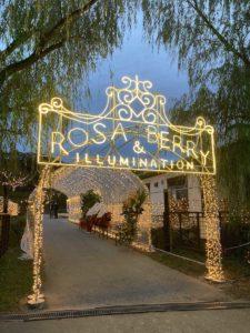 Rosa & Berry Illuminations