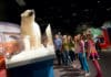 Science-North-polar-bear
