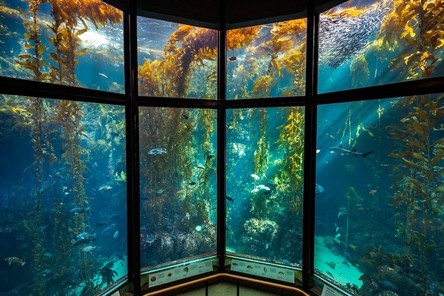 The Kelp Forest exhibit at Monterey Bay Aquarium