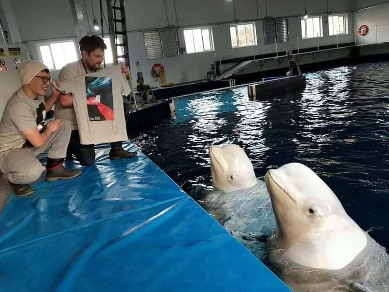 sea life trust beluga whales
