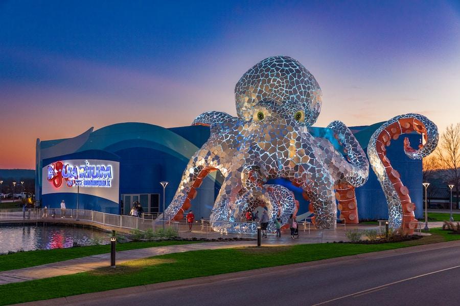 Aquarium at the Boardwalk Branson octopus